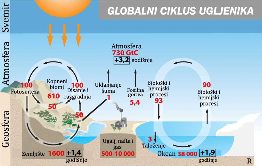 Globalni ciklus ugljenika