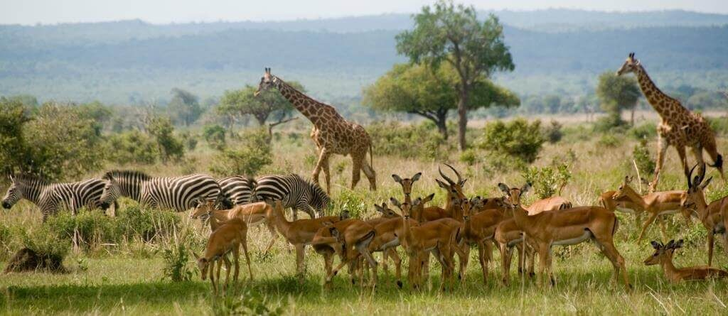 Savana Tanzanija, Afrika